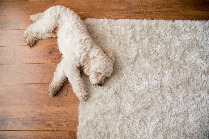 Decorating tips - dog on cozy rug